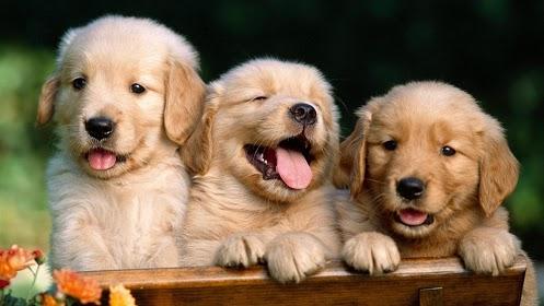 wallpaper-animal-puppy-cute-1080x1920