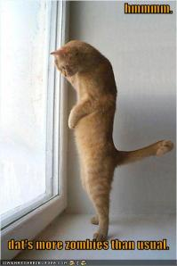 funny-pictures-cat-sees-many-zombies-from-window-jpg