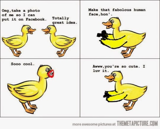 funny-ducks-taking-pictures-duckface