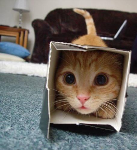 gatto-lubitoso